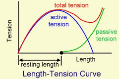 strenght tension curve